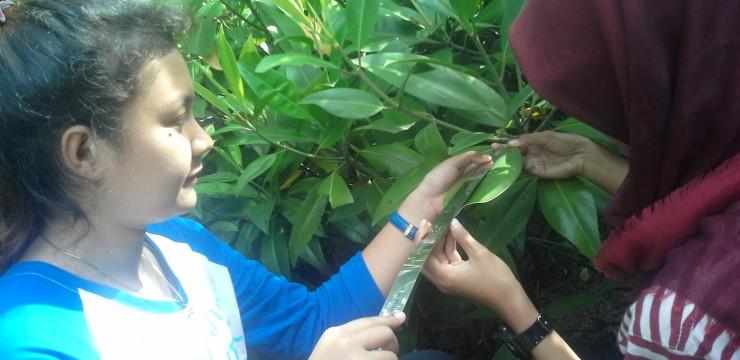 Mahasiswa FPK Praktikum Ekosistem Mangrove dan Bentos di Mangrove Wonorejo